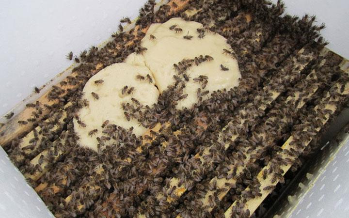 Пчелы любят канди