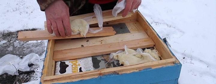 Подкормка пчел с помощью канди