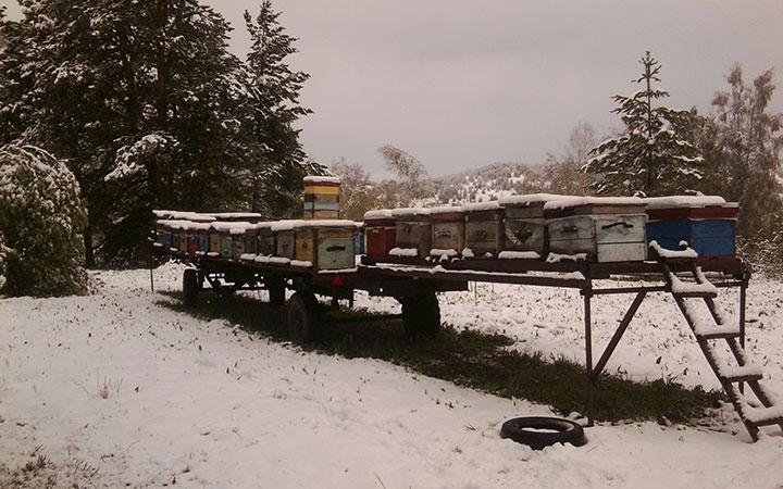 Зимовка ульев на улице