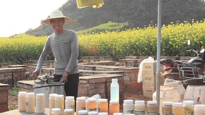 Пчеловод Китая