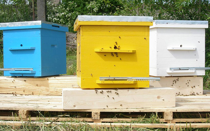Пчелы у нуклеуса
