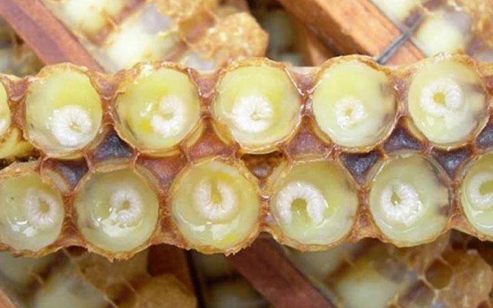 Маточное молочко с личинками