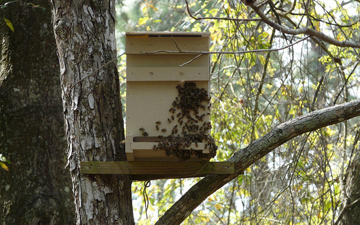Ловушка для пчел на дереве
