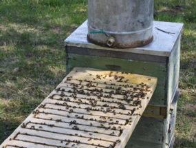 Общая поилка для пчел