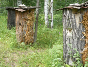 Ульи-колоды