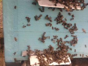 Пчелы на улье