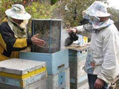 Опрыскивание пчел