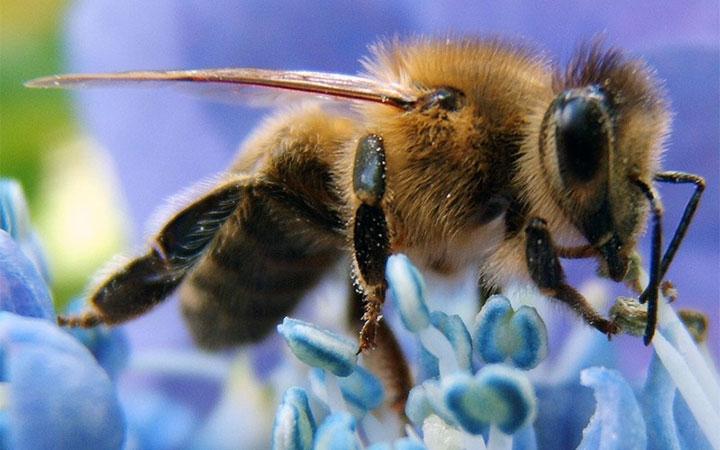 Пчела на цветке с нектаром