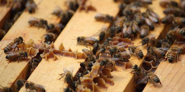 Пчелы и прополис