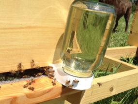 Кормушка для пчел