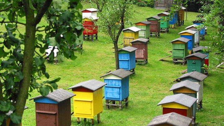 Большая пчелиная пасека